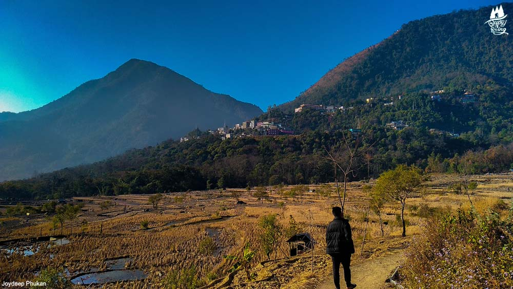 The terrace fields and Jakhama Hills of Nagaland