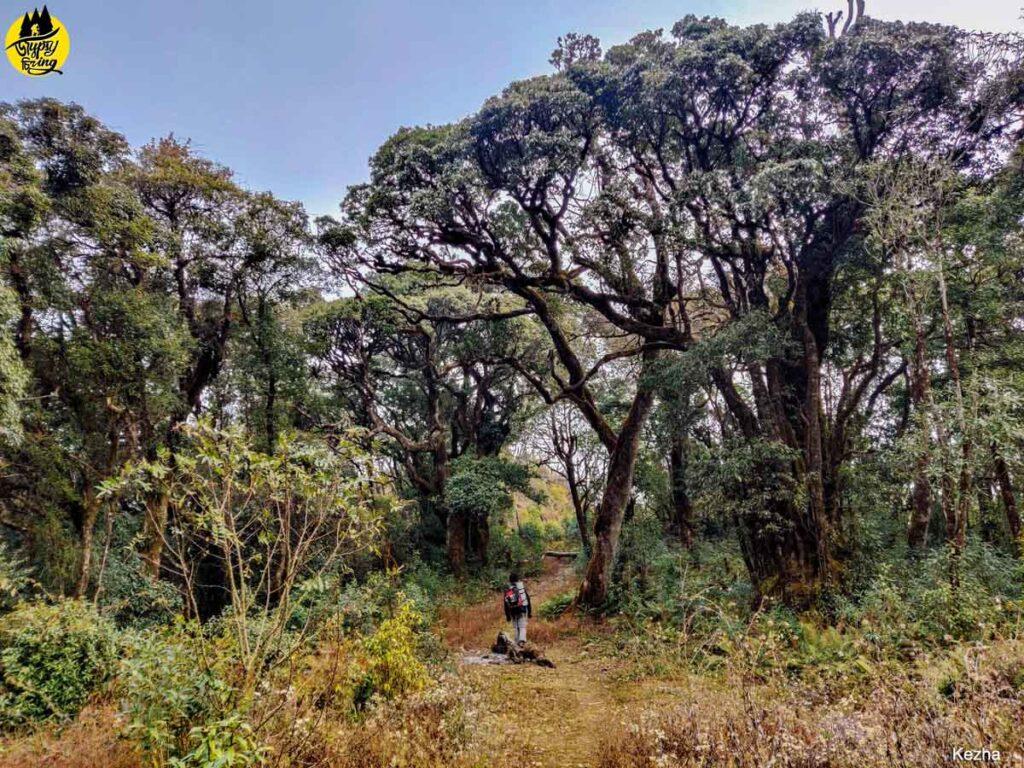 Mount Japfu Trail