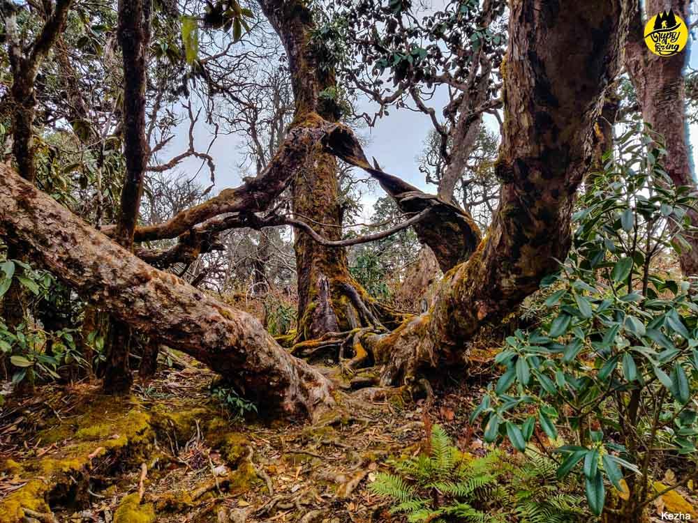 Mt. Japfu Trail, Nagaland