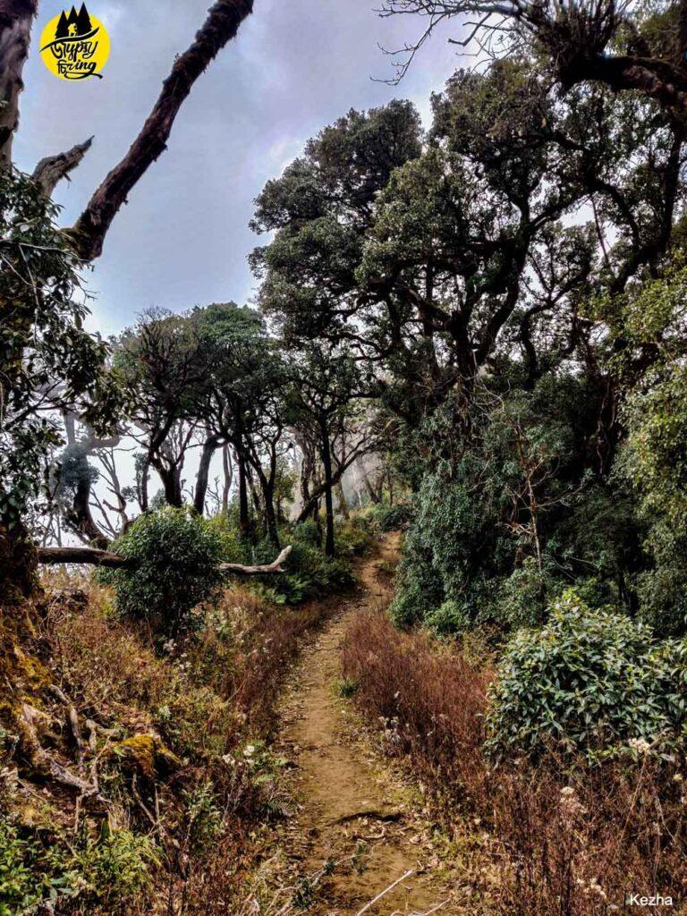The trekking trail of Mt. Japfu