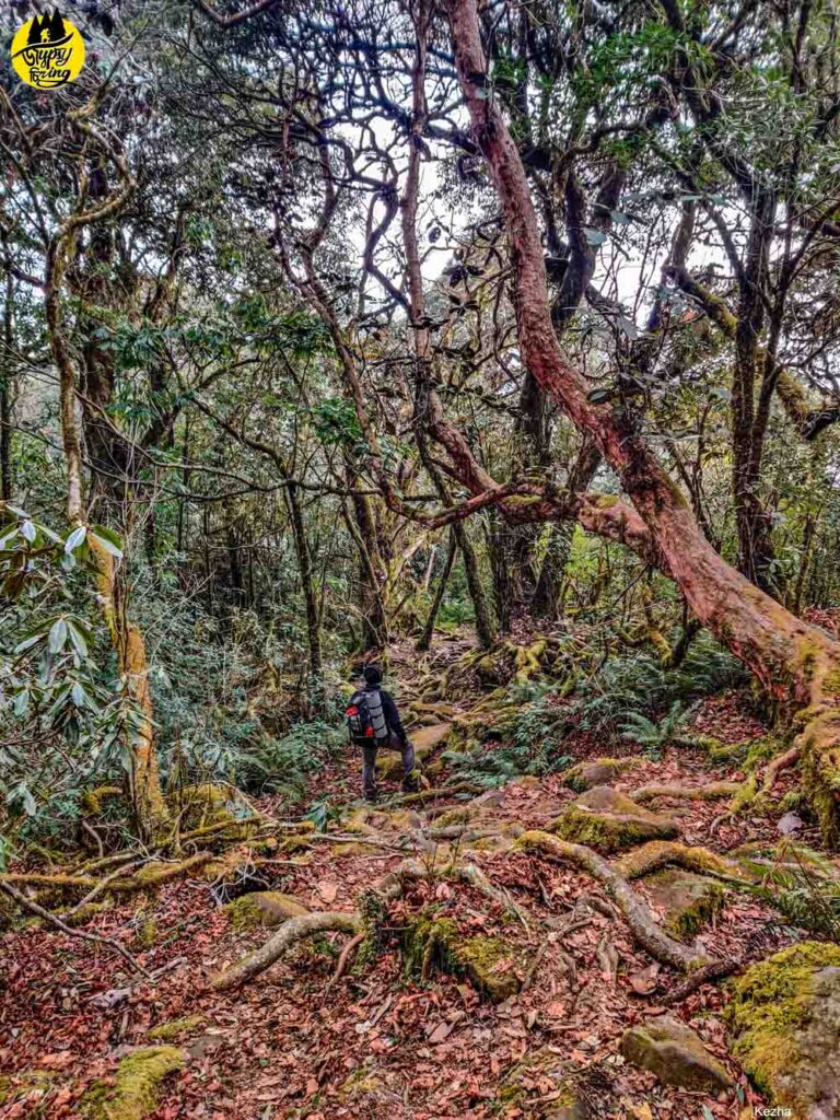 Mt. Japfu trail