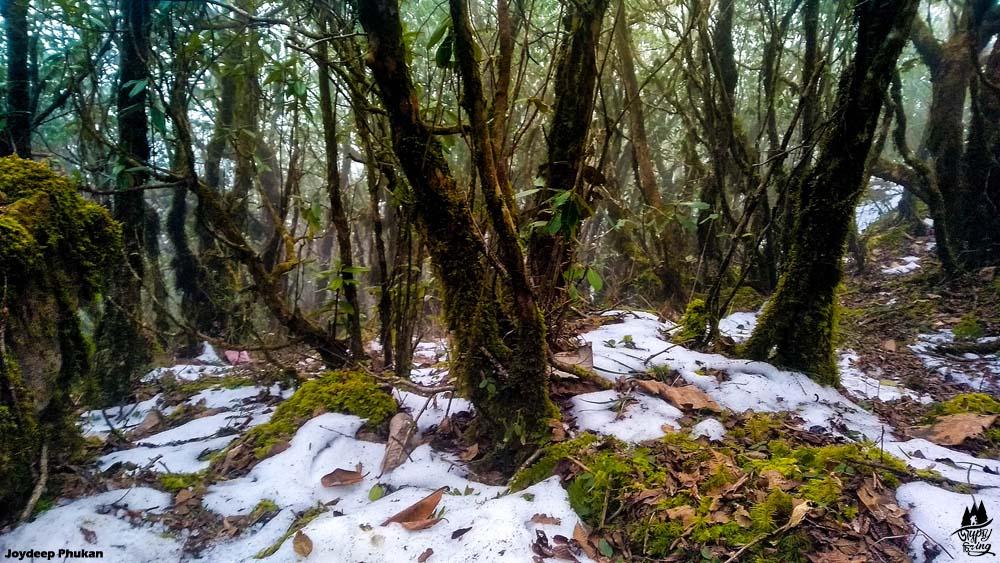 Snow in Mt. Japfu, Nagaland